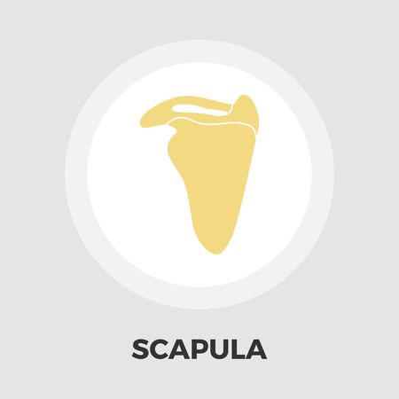 scapula: Scapula icon vector. Flat icon isolated on the white background. Editable EPS file. Vector illustration.