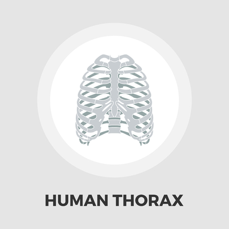 thorax: Human thorax icon vector. Flat icon isolated on the white background. Editable EPS file. Vector illustration.ground. Vector illustration.