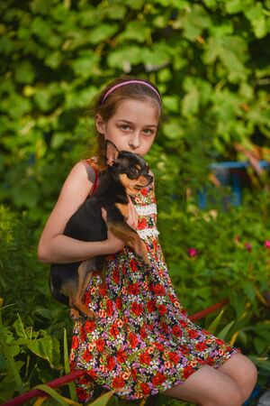 A little girl with her pet chihuahua dog.9 year old baby and chihuahua.A girl in a flower dress on a walk with her pet. A girl on a background of greenery on a walk.A series of photos with a chihuahua