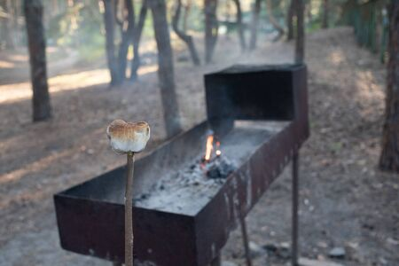 Marsh Mellow at the stake.marsh mellows on wooden skewers toasting over wood flames.Marshmallows in the form of a bear fried at the stake in the forest. Life style.Girl cooks marshmallows at the stake Stok Fotoğraf
