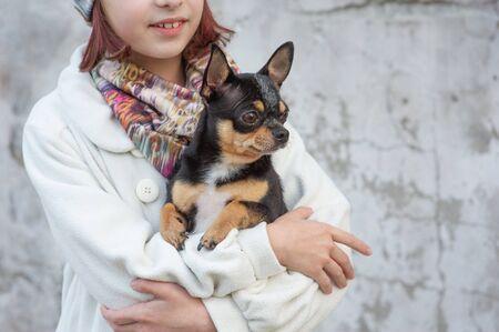 Der kleine Chihuahua sitzt ruhig auf den Armen seiner schönen Besitzerin, dem schönen Teenie-Mädchen und dem Chihuahua. Chihuahua in den Armen eines Mädchens. Mädchen mit einem Chihuahua-Hund in Schwarz und Braun und Weiß im Herbst Standard-Bild