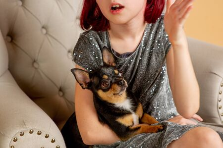 teenage girl with her favorite dog is a Chihuahua sitting on the couch. Girl with a chihuahua dog on the couch. Short-haired chihuahua mini with a child. Girl 9 years old with a pet in her hand.