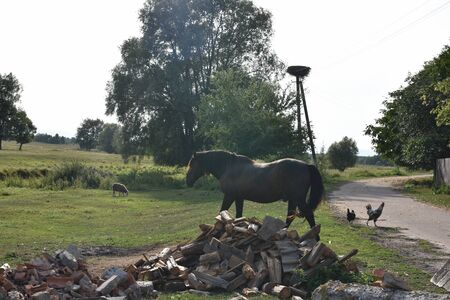 Horse on a summer pasture. Horse in the village. Horse in a village or on a ranch. Summer, ranch, horses. Ecotourism. Eco Vacation Concept