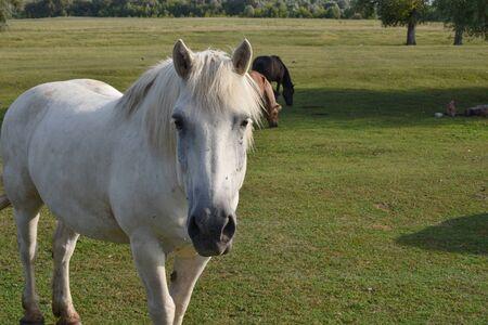 Caballo en una pastura de verano. Caballo en el pueblo. Caballo en un pueblo o en un rancho. Verano, rancho, caballos. Ecoturismo. Concepto de vacaciones ecológicas