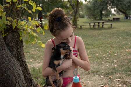 A little chihuahua is laying in the arms of his owner. Girl 9 years old. Chihuahua dog in his arms. Chihuahua black brown white. Girl 9 years old and chihuahua