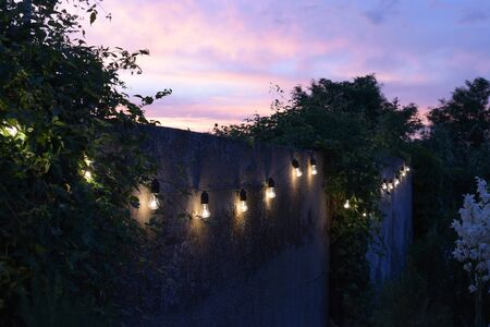 trendy globe string lights outdoor hanging from trees in private garden with fence and greenery in the background. Light bulbs on the fence and greenery