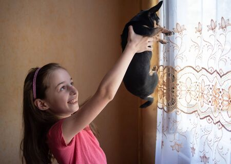 Portrait smiling teenager girl holding small adult chihuahua dog home. Girl holding a chihuahua in front of the window. The girl smiles and holds her pet in outstretched arms by the window.Dog and man Stock fotó