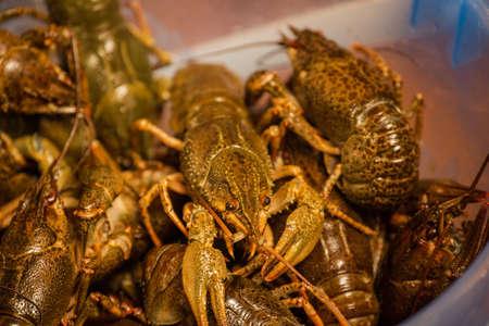 Crayfish in a bucket. Green crayfish not boiled. Crayfish