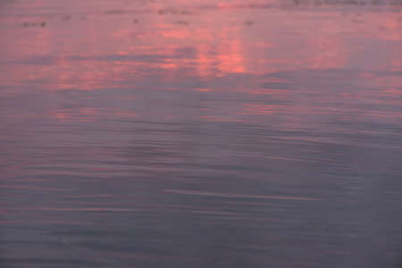 Water surface of gradient blue and pink color. River or sea water smooth background with small waves and sun glares. Sunset water texture