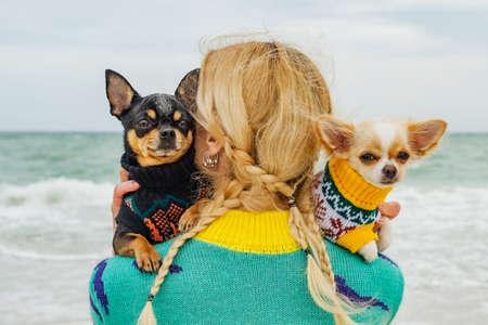Woman and two chihuahua dogs by the sea. girl and two dogs on the beach Standard-Bild