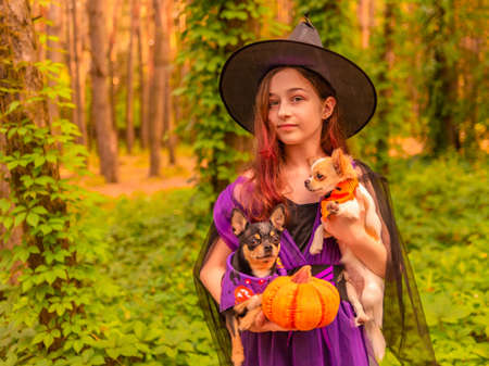 Halloween concept. Girl in witch costume with Halloween pumpkin outdoors holds a dogs. Фото со стока