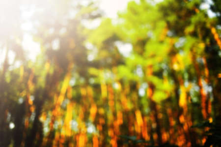 Nature abstract background. Green bokeh in the forest with sunshine.