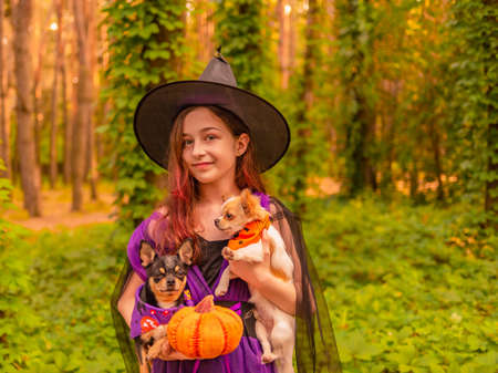 Teenage girl with two chihuahua dogs in the forest on Halloween. Halloween concept. Фото со стока