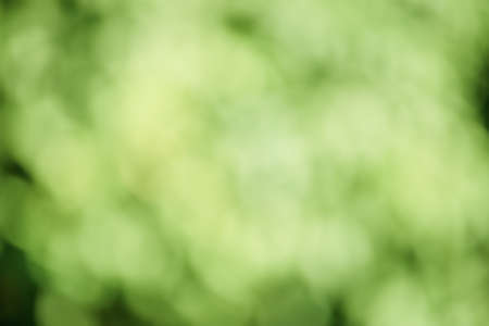 Abstract background of blurry green leaves on tree trunks. Defocus light background. Фото со стока