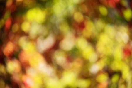 Autumn concept. Defocus blurred autumn natural background consists of colorful foliage.