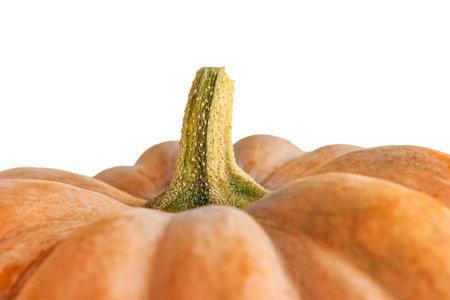 Selective focus of pumpkin. Pumpkin macro photography.