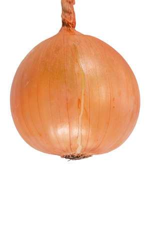 Onion isolated on white background. Autumn harvest.