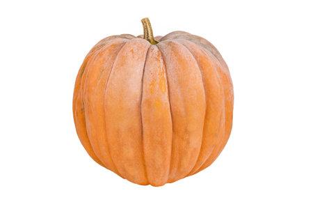 Fresh orange pumpkin isolated on white background. Pumpkin isolate.