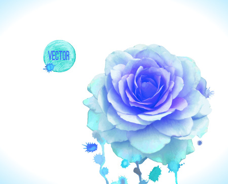 Watercolor vector blue rose. Vector