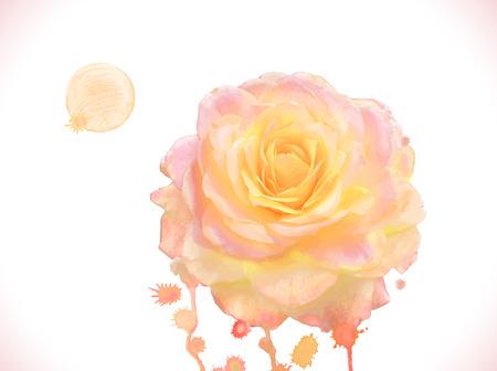 orange rose: Watercolor orange rose