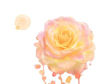 orange rose: orange rose