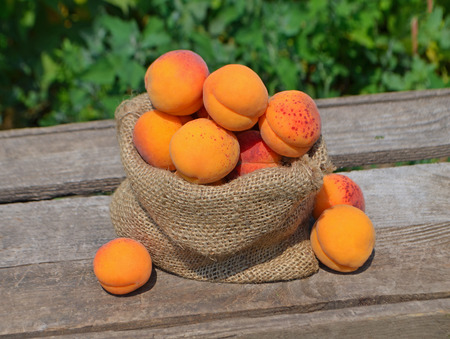 bagging: Apricots in bag. Apricots on bagging on wooden table on nature background