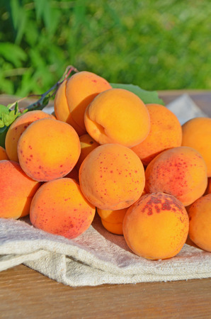 apricots: Ripe  sweet  apricots. Fresh apricots on table