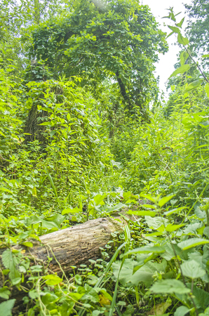 dense forest: Fallen tree  lying in a dense forest. Jungle like forest scenery Stock Photo