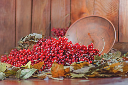 Viburnum berries  on wooden table with autumn leaves