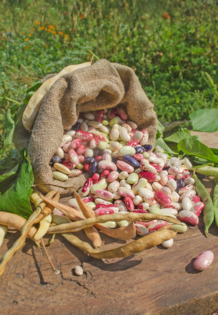 lima beans white beans: Bean variety mixed.  Dry beans in burlap sack on table