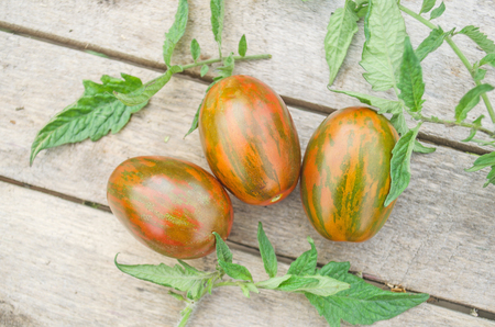 Tiger cherry tomatoes.  Heirloom colorful tomatoes. Striped variety of red tomatoes.  Red striped tomatoes