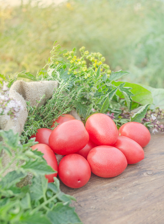 Delicious red tomatoes. Tomatoes on old wooden table. free space on table. Striped variety of red tomatoes. Red striped tomatoes