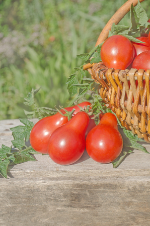 Delicious red tomatoes. Tomatoes on old wooden table.