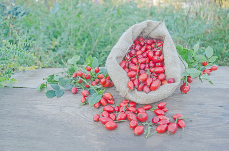 Rose hip fruit on old  wooden background