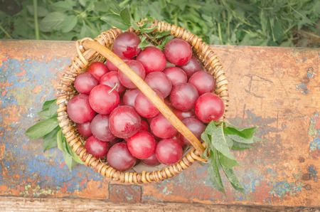 Fresh plums in basket on wooden table. Ripe purple plums with leaves in  basket over wood background. Top view plum
