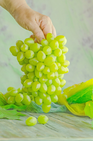 Close up of workers hands with white grapes