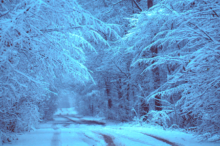 Fairy forest covered with snow. Winter road in forest. Rural road at dark night time Stock Photo