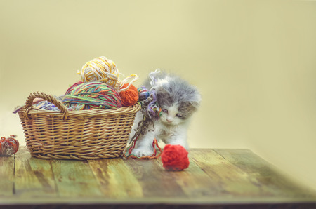Wool gray funny kitten playing with wool ball.  Cute kitten in basket with balls of yarn. Knitting concept and place for text. Archivio Fotografico