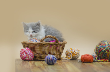 Cute fluffy cat is playing with ball of knitting. Cute kitten and ball of thread. Portrait of cute grey pretty kitten. Funny kitten and knitting. Knitting concept and place for text. Archivio Fotografico