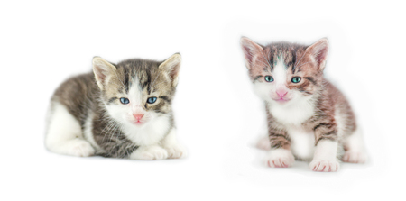 Small pretty kitten isolated on white background Stock Photo