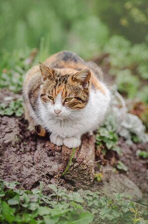 Cat on the grass in the garden. Cute cat in park. Kitten walking on green grass.