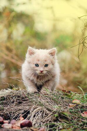 Beautiful Kitten portrait in green grass in nature. Kitten sitting in flowers against bokeh background. Imagens