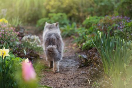 Look back cat in flower bed. Cute little kitten in the garden. Grey cat playing in garden. Look back cat in the garden