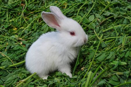 ute white rabbit in grass. Rabbit in spring green grass background. Cute little Easter bunny