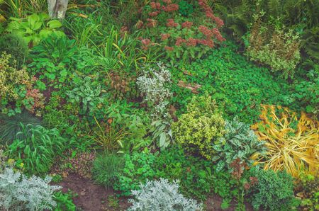 Annual and perennial plants in full bloom. Multicolored autumn or summer flowerbed on a lawn