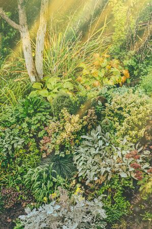 Flowers in autumn garden background. Flowers on sunny fall park background. 免版税图像