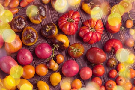 The harvest of assorted tomatoes. Beautiful ripe different varieties tomatoes. Colorful tomatoes background or texture. Stockfoto