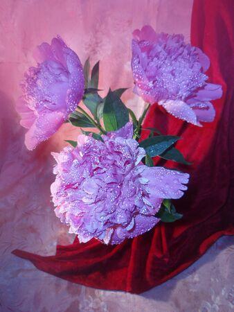 Bouquet of fresh pink peonies. Bouquet of peonies flower.