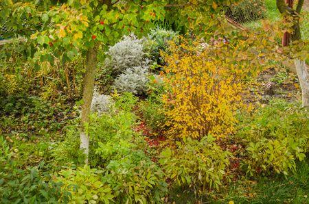 Scenic autumn flowerbed in full autumn bloom. Flowers in autumn garden. Autumn garden with fall flowers