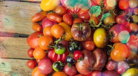 Red tomato on the table. Many tomatoes on wooden table. Fresh ripe organic garden tomatoes on wooden table.